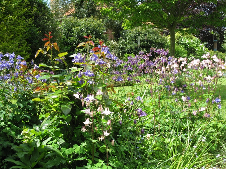 Dr Adrian Cooper - garden