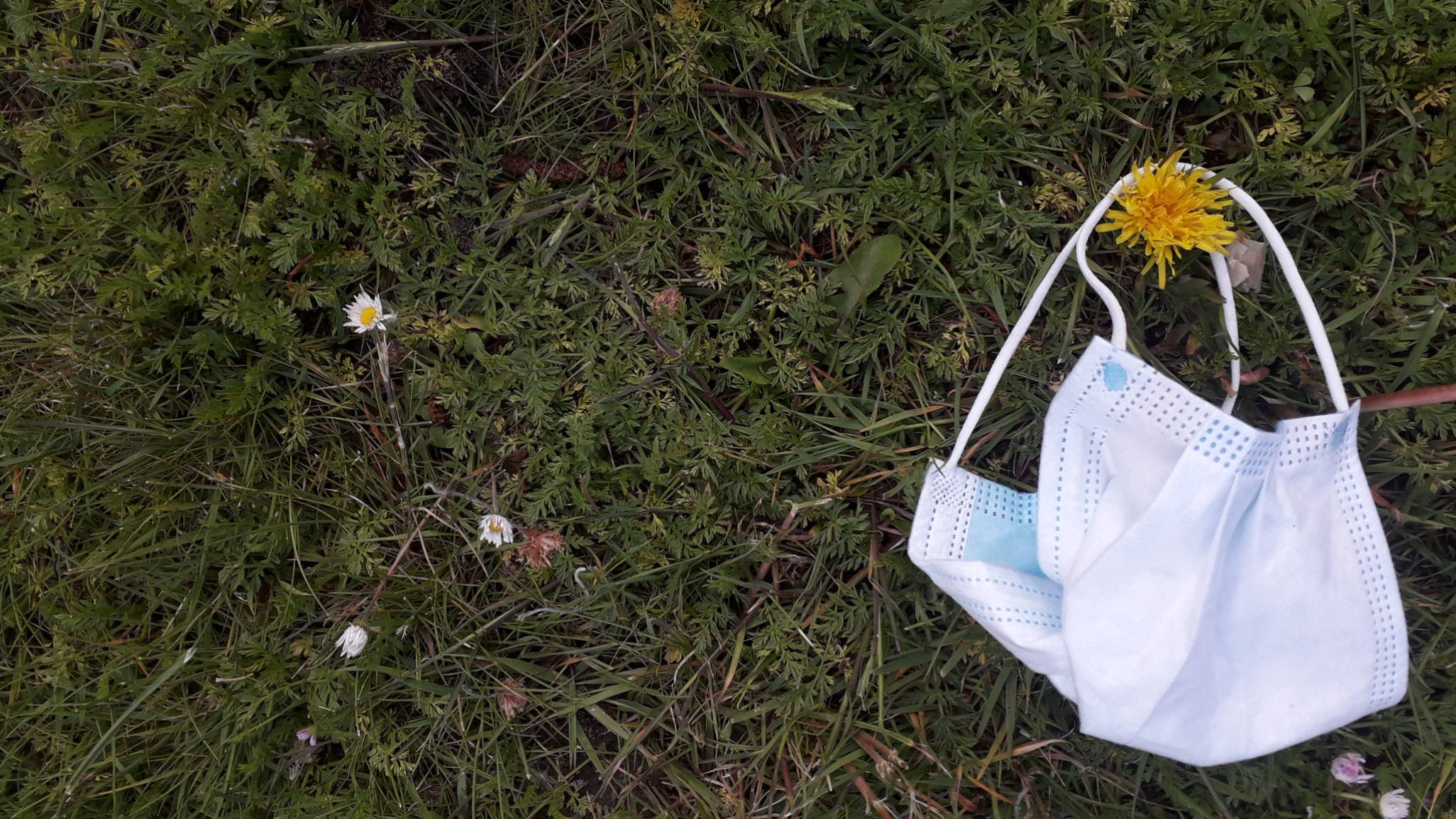 A surgical mask on some grass next to some daisies