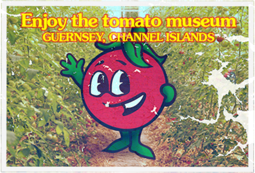 guernsey tomato museum postcard